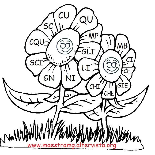 fiori ortografici